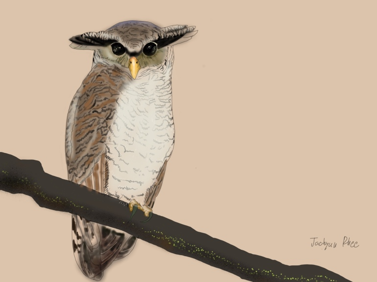 Barred_Eagle_Owl (1)