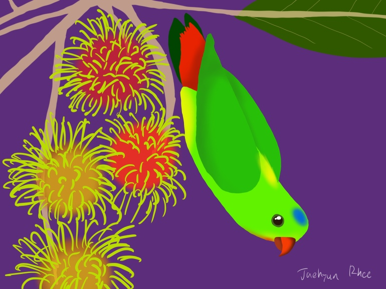 Blue_Crowned_Hanging_Parrot
