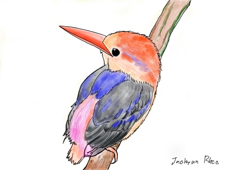 Oriental_Dwarf_Kingfisher