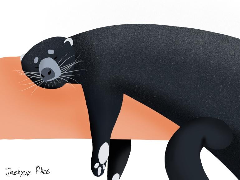 Bear_Cat (1)