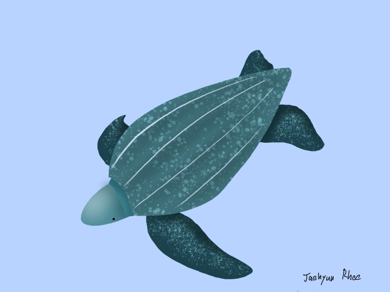 Leatherback_Seaturtle