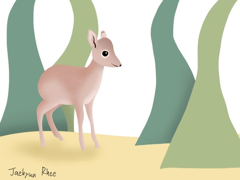 Mouse_Deer
