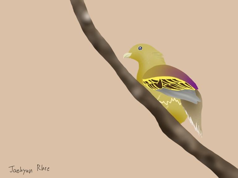 Sumba_Green_Pigeon