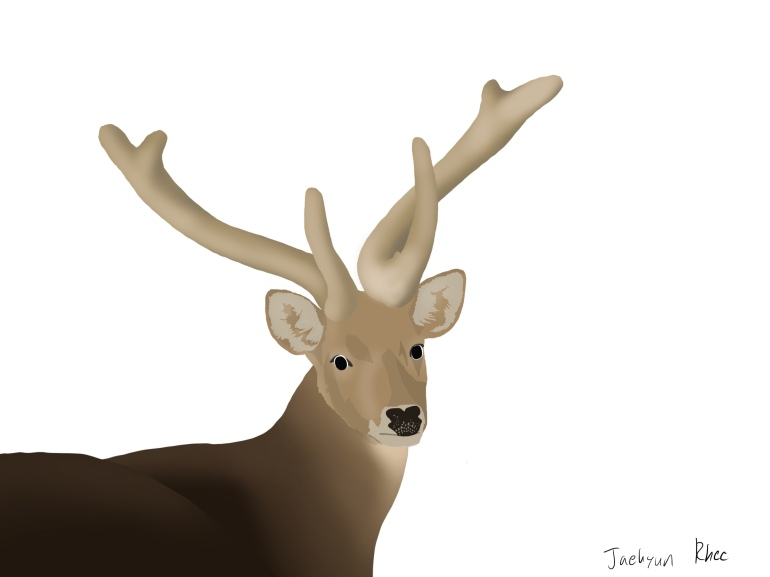 Eld's_Deer